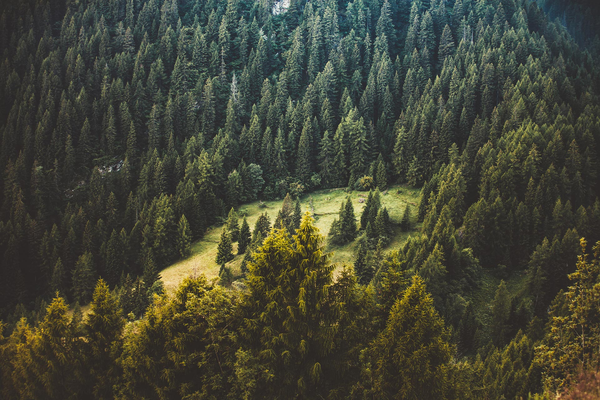 Picture of the forest